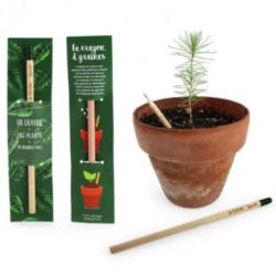 Crayon de bois à graines